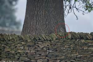 Owls prove to be masters of disguise hiding in walls
