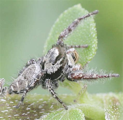 Spiders of Goodwell and Texhoma, Texas County, Oklahoma